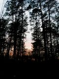 Forestreeyal royalty free stock photography