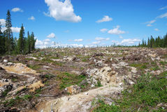 After forestry. Empty part of forest is distorted after forestry. Cutover patch is typical landscape in places of felling stock images