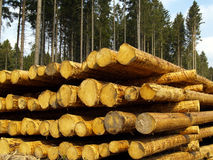 Forestry. Logs in the forest, ready for transport Stock Images