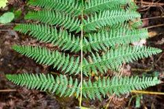 forestry fotos de stock royalty free