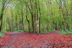 forestry imagem de stock