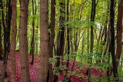 forestry fotografia de stock
