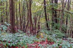 forestry foto de stock