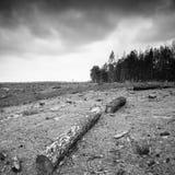 forestry foto de stock royalty free