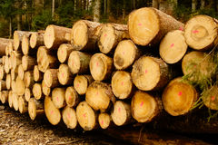 forestry imagens de stock