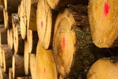 forestry fotos de stock