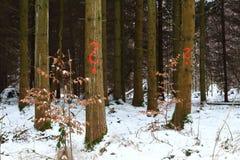 forestry imagem de stock royalty free