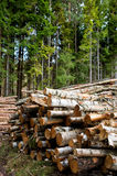 Forestry. A pile of logs recently harvested Royalty Free Stock Photo
