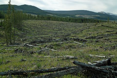 Forestry, Alberta Canada. Royalty Free Stock Photo