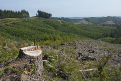 Forestry clear-cut, signs of reforestation. Forestry operation, with clear-cut and replanting in view stock photography