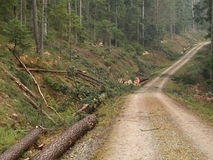 Forestry. Cut trees near a dirt road royalty free stock photo