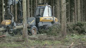 Forestry harvester cutting up log. In pine forest stock video footage