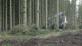 Forestry harvester working. In pine forest stock video footage