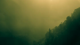 Forestry hillside. The forestry green hillside of Nepalese mountain in fog royalty free stock image
