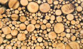 Forestry industry logs cut and timber logging Stock Image