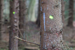 Forestry industry tree felling, marked tree. Forestry industry tree felling and timber logging, marked tree stock photography