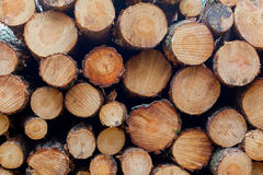 Forestry industry tree felling. And timber logging royalty free stock photo