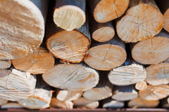 Forestry industry tree felling Royalty Free Stock Images