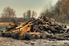 Forestry log pile in HDR. Stock Photography