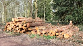 Forestry Logs. A Pile of Forestry Logs in a Woodland Setting royalty free stock photos