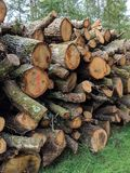 Forestry logs. Chopped down in woods stock photos