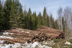Forestry. Logs stacked in pile after felling Stock Images