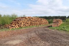 Forestry Logs. Royalty Free Stock Image