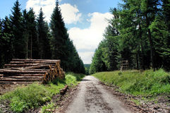 Forestry. A long and straight way through coniferous forest with woodpiles at edge, blue sky with white clouds Stock Photography