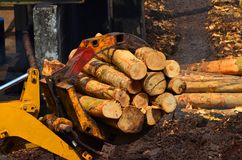 Forestry machinery Stock Photography