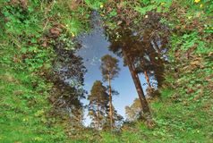 Forestry mirror Stock Images