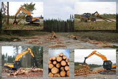 Forestry montage Royalty Free Stock Photos