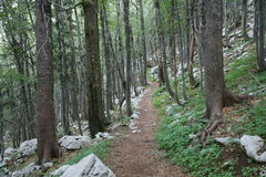 Forestry Path Royalty Free Stock Photography