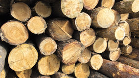 Forestry. Pile of logs at a forestry plant Royalty Free Stock Photo