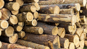 Forestry. Pile of logs at a forestry plant Royalty Free Stock Photography