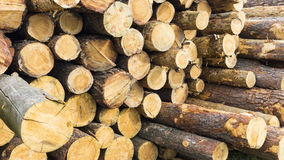 Forestry Stock Photos