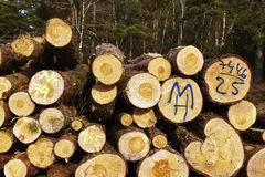 Forestry - Pile of tree boles Stock Photos