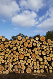 Forestry - Pile of tree boles Stock Image