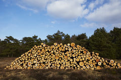 Forestry - Pile of tree boles Royalty Free Stock Photography