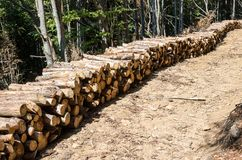 forestry Remoção de árvores inoperantes e doentes foto de stock royalty free