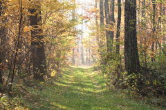 Forestry road in autumn Royalty Free Stock Image