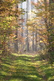 Forestry road in autumn Royalty Free Stock Images