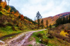 Forestry road Royalty Free Stock Photos