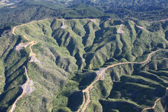 Forestry Slopes from the Air. Young pine trees planted in rows on cleared mountain slopes. Coromandel Peninsular, New Zealand Stock Images