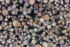Forestry stacked logs Royalty Free Stock Photo