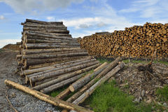 Forestry Timber Stacks Royalty Free Stock Image