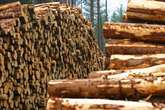 Forestry timber stacks. Stacks of cut timber in forest in Scotland Stock Photography