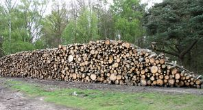 Forestry Tree Logs. A Freshly Cut Pile of Forestry Tree Logs royalty free stock image