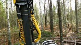 forestry A vista do registador corta a árvore na floresta video estoque