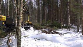 forestry A vista do registador corta o tronco spruce video estoque