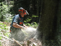 Forestry worker with a chainsaw Royalty Free Stock Photography